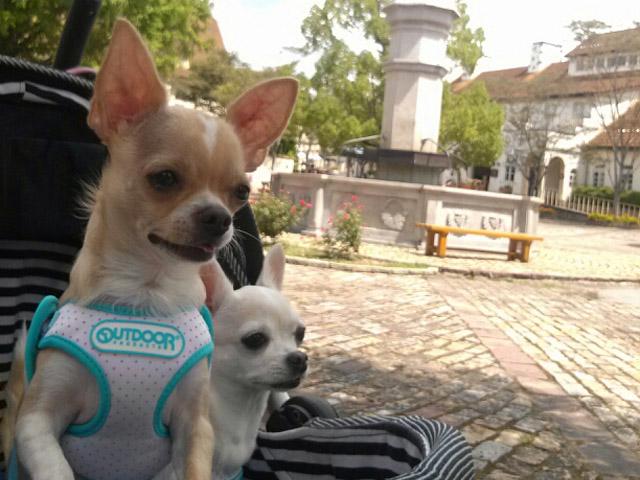 ペットと一緒に旅をしよう投稿写真